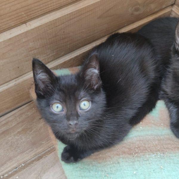 Dakota chaton