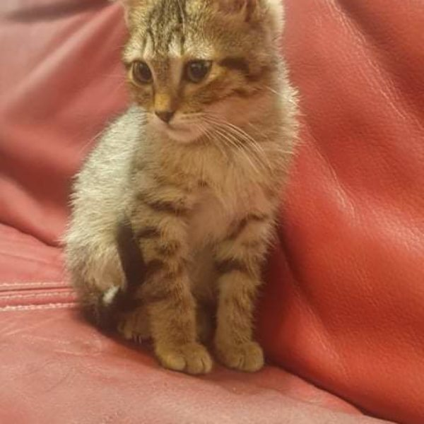 Akira (chaton)