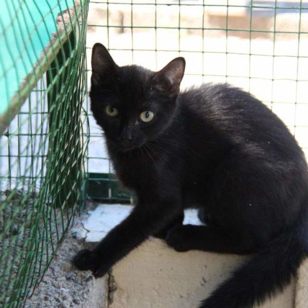 Giao (chaton)