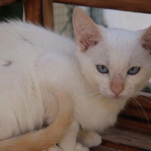 Pomelos (chaton)