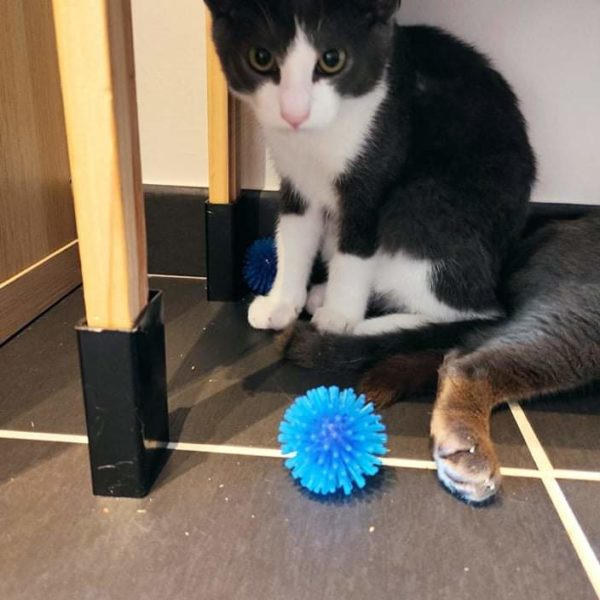 Sacha en FA (chaton)