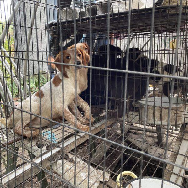 Intervention : 13 chiens sortis de l'enfer