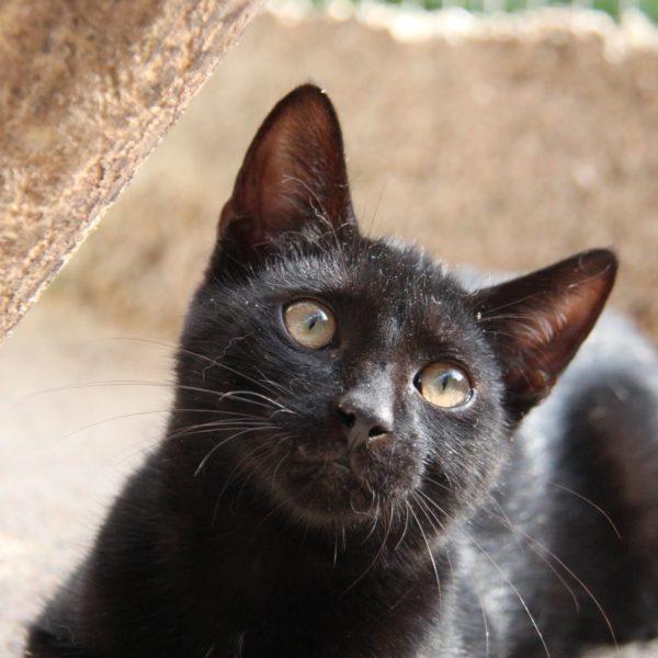 Kiwi (chaton)